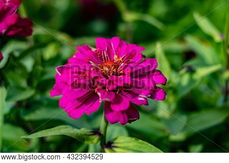 A Red Flower On A Green Blurry Background, Taken In Close-up.