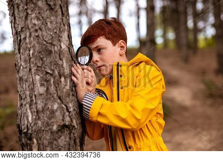 Attentive Preteen Ginger Boy In Yellow Raincoat Observing Tree Bark Through Magnifying Glass While S