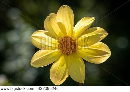 A Yellow Flower On A Blurry Background, Taken In Close-up.