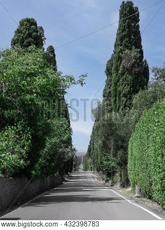 Bolgheri, Italy - August 2021: Characteristic Long Road Of The Medieval Village Of Bolgheri In Tusca