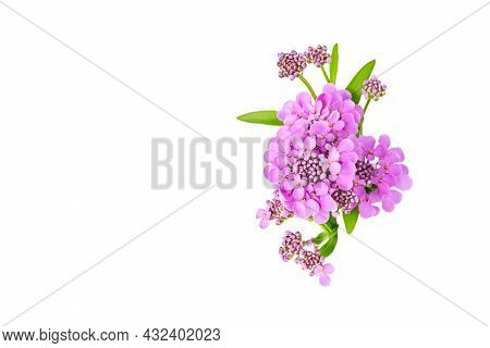 Layout Of Greeting Card, Banner For Birthday, Wedding. Beautiful Purple Flowers Of Iberia Close-up M
