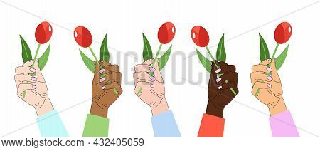 Hand Holds A Flower. Hands Of Different Nationalities. Female Hands With Manicure. Red Tulip. Isolat