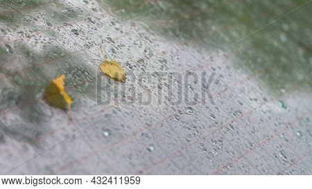 Yellow Tree Leaves Fell On The Car Window In Raindrops In A Rainy Autumn.