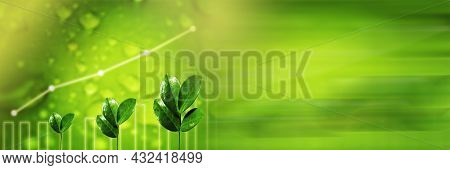 Panoramic Business Banner. Agriculture Plant Seeding Growing. Germinating Seedling. Business Develop