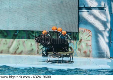 Cute Sea Lion On Stand Near Pool At Marine Mammal Park