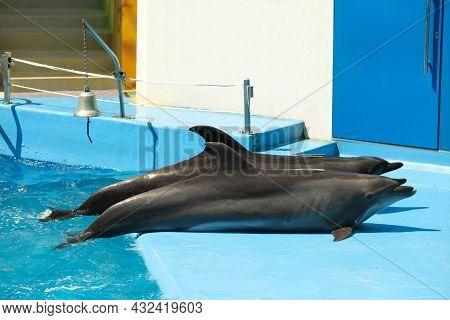 Dolphins Near Pool At Marine Mammal Park
