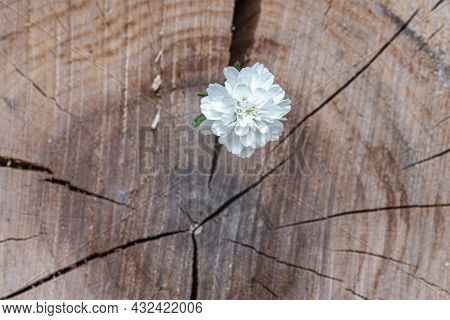 A White Flower On An Indistinct Background Of A Thick Tree Cut.