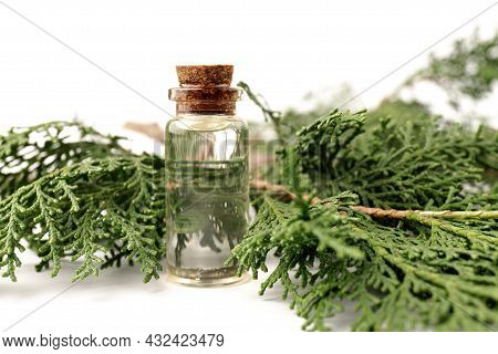 Cypress Essential Oil Isolated On White Background. Cypress Oil On Bottle For Beauty, Skin Care, Wel