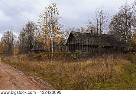 Autumn Country Road In An Abandoned Village, Dry Plants And Birch Trees With Yellow Leaves. Wooden V
