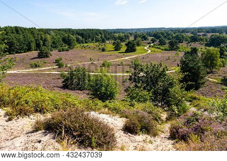 Landscape With Heather With Purple Flowers And Hiking Trails In The Dutch Countryside With Trees In
