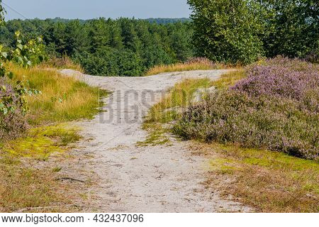 Hiking Trails Among Wild Grass, Heather With Purple Flowers With Trees In The Background, Dutch Coun
