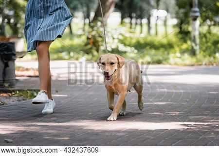 Partial View Of Woman Running With Yellow Labrador In Park