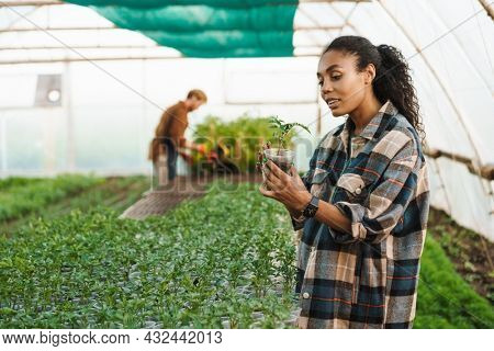 Happy middle aged multiethnic couple of farmers working in a greenhouse together holding plant