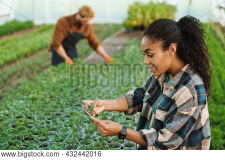 Happy middle aged multiethnic couple of farmers working in a greenhouse together woman taking pictures with mobile phone