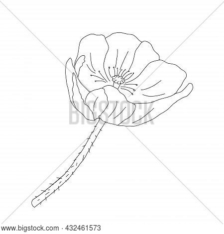 Vector Illustration Of One Black Common Poppy Flower Isolated On A White Background
