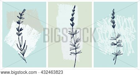 Decor Printable Art. Hand Drawn Lavender Branches On Background With Brushstroke Textures