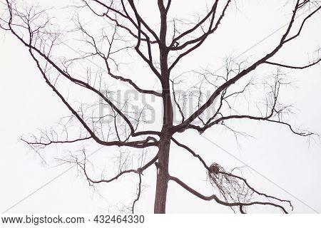 Tree Branch On Blue Winter Sky. Tree And Branches Of The Tree. Out Line Of Dry Tree Branch Against A