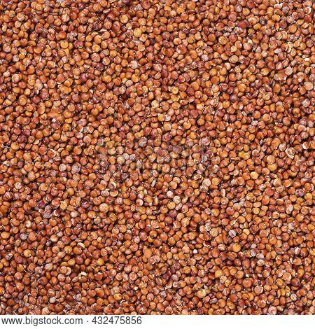 Chenopodium Quinoa - Organic Red Quinoa Seeds