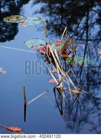 A Close Up Of Bent Marsh Grasses, Fallen Leave And Lily Pads In A Pond.