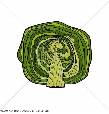Vector Illustration Of Zucchini Using Shades Of Green And Strokes.