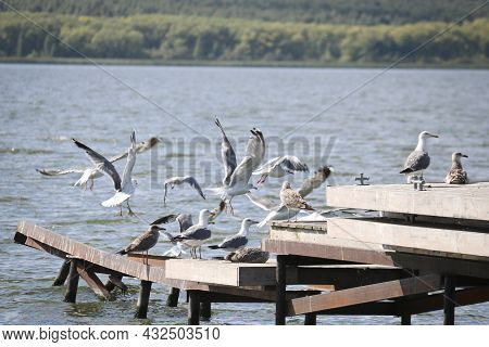 A Flock Of Caspian Gulls (larus Cachinnans), Young And Adults, Sit And Take Off On The Pier Above Th