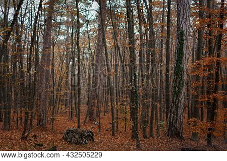 Autumn Forest Tall Trees. A Mysterious Autumn Landscape With Red-brown Leaves. A Foggy, Cloudy Day I