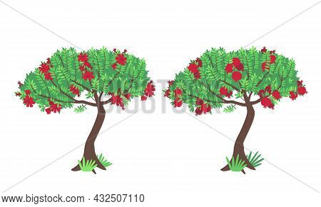 Pomegranate Tree With Flowers And Fruits Isolated On White. Beautiful Bloom And Juicy Pomegranate Ha
