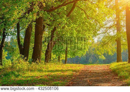 The Alley Of The Autumn Park . The Season Is Autumn. September, October, November. A New Season. Yel