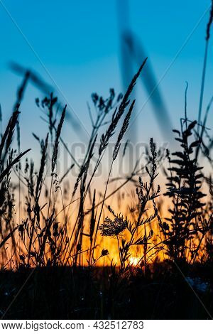 Sun Is Rising Over The Meadow. Orange And Blue Sunset In The Field With Grass Silhouette. Close Up L