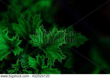 Defocused Vivid Green Natural Plant Leaves Backgroound.