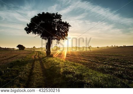 Moody Sunset Across Rural Agricultural Landscape With Silhouetted Tree. Beautiful Fairytale Scene Of