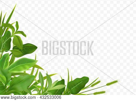 Grass Herbs Young Cereal Plant Seedlings Green Leaves Decorative Realistic Corner Composition On Tra