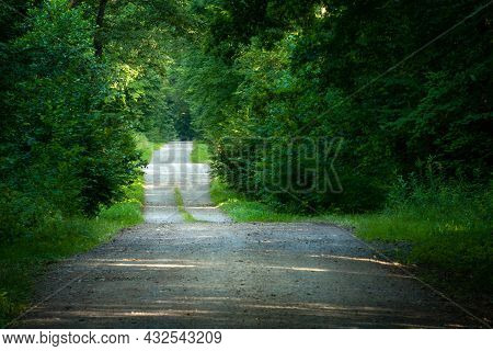 Hilly Gravel Road Through Green Dense Forest, Summer View