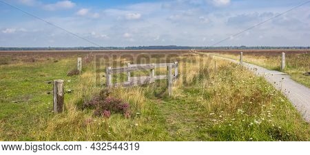 Bicycle Path Going Through The Heather Fields Of National Park Dwingelderveld, Netherlands