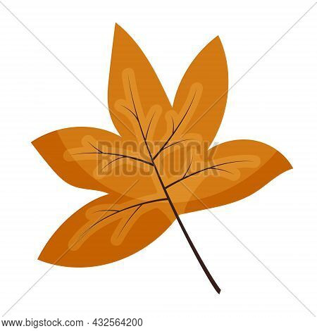 Vector Drawing Of An Orange Maple Leaf. Autumn Foliage. Maple Leaf Isolated On White Background In F