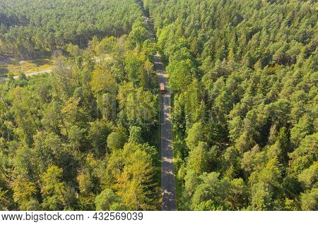 Dense, Tall Pine Forest. Green Canopy Of Trees. Between The Trees You Can See An Asphalt Road. The P