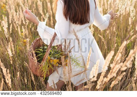 Woman Holding Basket With Freshly Picked Organic Herbs. Idyllic Atmosphere
