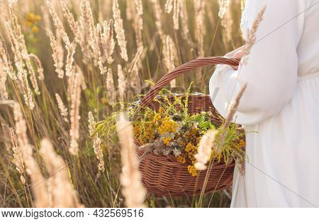 Girl Holding Basket With Freshly Picked Organic Herbs.
