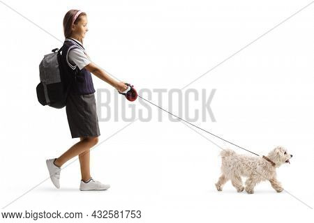 Full length profile shot of a schoolgirl with a backpack walking a white maltese poodle dog isolated on white background