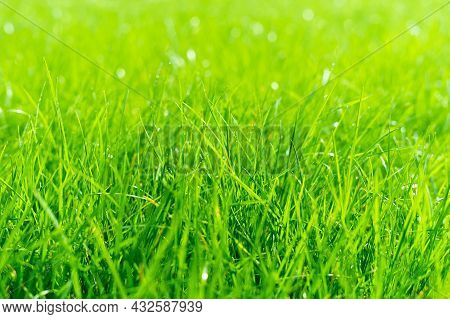 Juicy Lush Green Grass On Meadow With Drops Of Water Dew In Morning Light. Beautiful Artistic Image