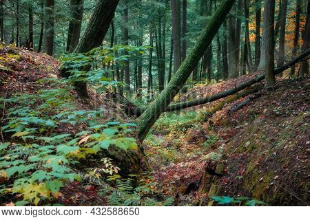 Deciduous trees in Black river forest in Michigan upper peninsula
