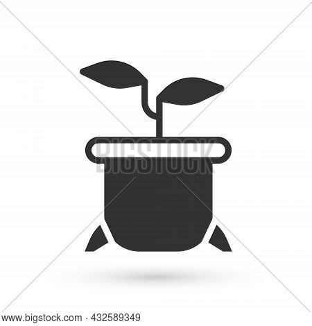 Grey Plant In Pot Icon Isolated On White Background. Plant Growing In A Pot. Potted Plant Sign. Vect