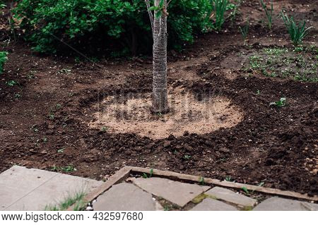 A Young Sapling With A Round Hole For Watering And Filled Sides Of The Earth On The Background Of A