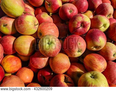 Group Of Red And Yellow Apples. Background And Texture. Close-up.