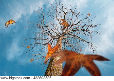 Autumn Scene, The Falling Color Leaves Of A Plane Tree, Selective Focus