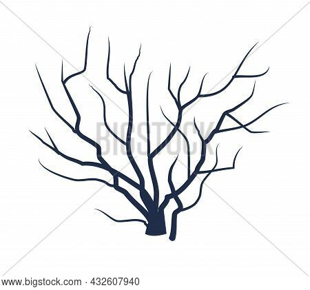 Bare Tree Without Leaves. Dark Silhouette. Beautiful. Crown With Branches. Or Close-up Of Bush. Wint
