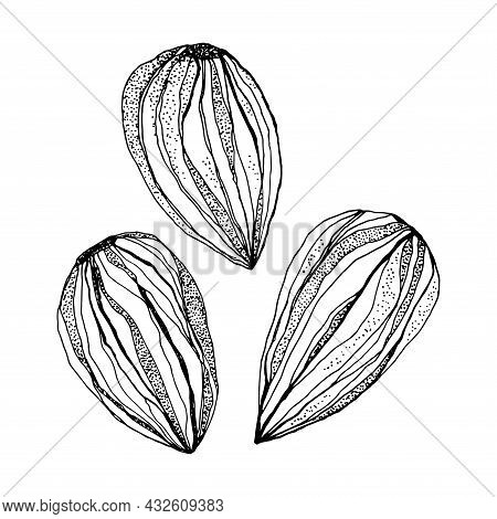 Almond Nuts Isolated On A White Background. Black And White Illustration.