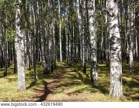 Autumn Walking Path In A Birch Grove Against A Background Of Blue Sky And Shadows From Tree Trunks
