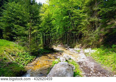 A Small Mountain Stream Flows High In The Mountains In The Forest