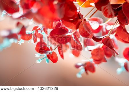 Red Leaves And Small White Flowers Hanging Down To Caress The Beauty. Autumn Background.